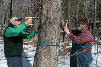 lanark-maple-syrup_fortunefarms-150405-0030