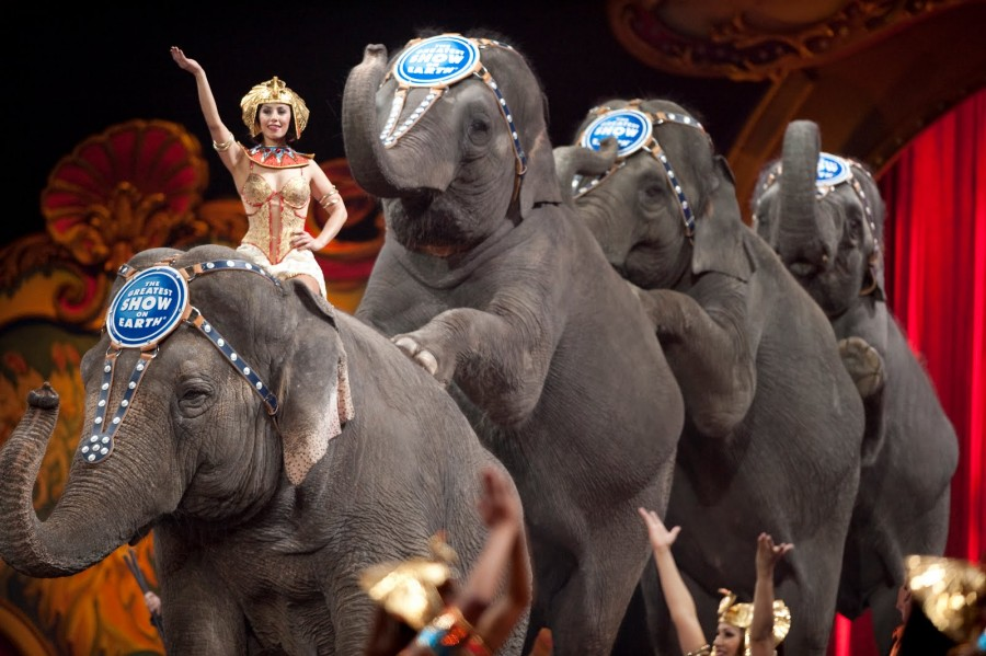 Send in the Elephants